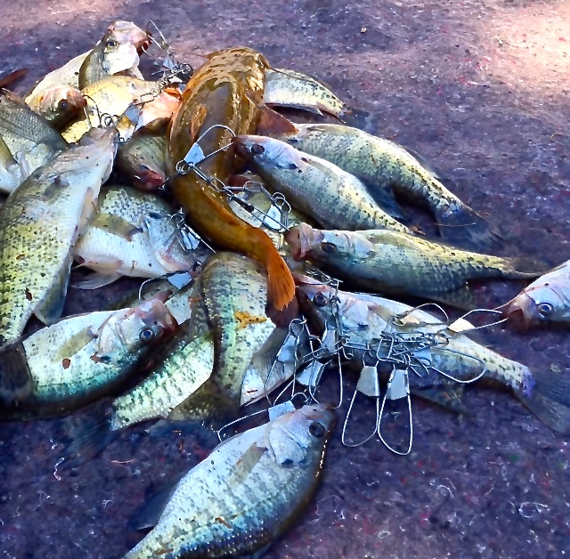 Broken bow lake fishing report beavers bend vacations for Fishing report near me